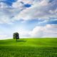 Green nature - PhotoDune Item for Sale
