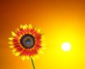 Sunny Sunflower - PhotoDune Item for Sale