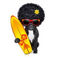 surfer dog - PhotoDune Item for Sale