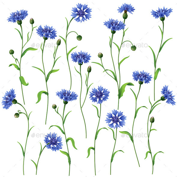 GraphicRiver Blue Cornflowers Set 10498447