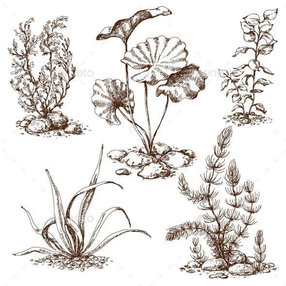 GraphicRiver Sketch of Underwater Plants 10498509