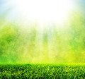 Green spring grass against natural nature blur. Sunny morning light - PhotoDune Item for Sale
