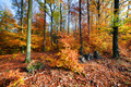 Natural forest in autumn, fall - PhotoDune Item for Sale