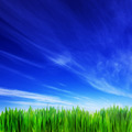 High resolution image of fresh green grass and blue sky - PhotoDune Item for Sale