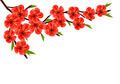 Spring background with blossom brunch of red flowers.  - PhotoDune Item for Sale