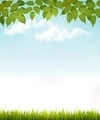 Nature background with leaves and grass.  - PhotoDune Item for Sale