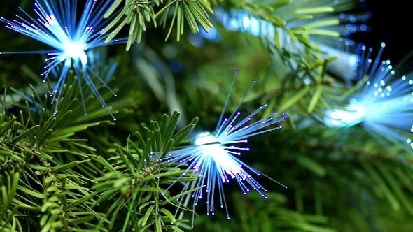 Coniferous Tree with Blue Fiber