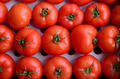 Tomatoes lined up - PhotoDune Item for Sale