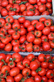 Tomatoes in cardboard crates - PhotoDune Item for Sale