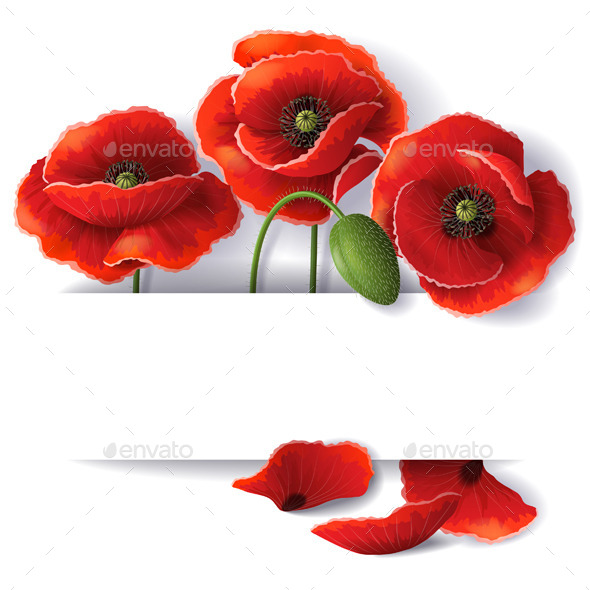 GraphicRiver Red Poppy Flowers 10508585