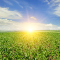 corn field and sunrise on blue sky - PhotoDune Item for Sale