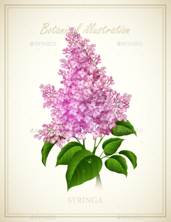 GraphicRiver Syringa 10512759