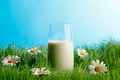 Glass of milk in grass with daisies  - PhotoDune Item for Sale