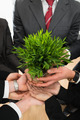 Businesspeople Hands Holding Plant - PhotoDune Item for Sale