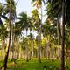 coconut grove - PhotoDune Item for Sale