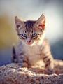 Gray striped kitten. - PhotoDune Item for Sale