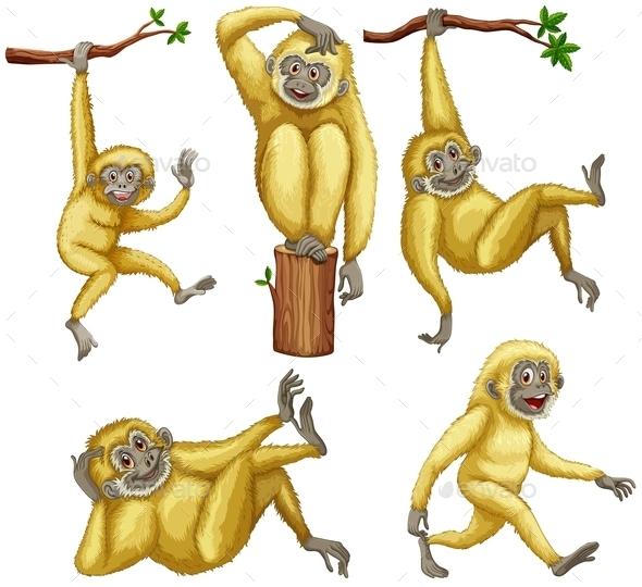 GraphicRiver Gibbon 10524696