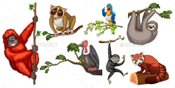 GraphicRiver Animals 10526011