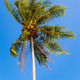 Tropical Palm tree in the wind - PhotoDune Item for Sale