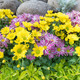 yellow and violet flowers - PhotoDune Item for Sale