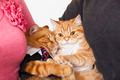 two cats in love with owners - PhotoDune Item for Sale