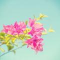 vintage flowers background - PhotoDune Item for Sale