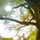 Tree & Sun (2 versions) - VideoHive Item for Sale
