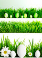 Set of easter eggs in grass - PhotoDune Item for Sale