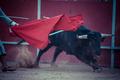Fighting bull - PhotoDune Item for Sale