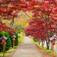 Stairway to chureito pagoda in autumn, Fujiyoshida, Japan - PhotoDune Item for Sale