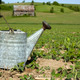 Vintage water can on a dry field - PhotoDune Item for Sale