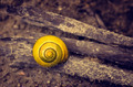 Yellow Snail - PhotoDune Item for Sale