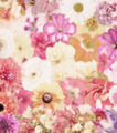 Colorful Floral Background - PhotoDune Item for Sale