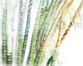 Bamboo Forest Watercolor - PhotoDune Item for Sale