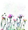 Cornflowers Watercolor - PhotoDune Item for Sale