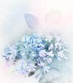 Blue Flowers Watercolor - PhotoDune Item for Sale