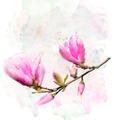 Magnolia Flowers - PhotoDune Item for Sale
