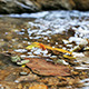 Stream of Flowing River - VideoHive Item for Sale