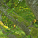 Tree & Park - VideoHive Item for Sale
