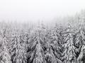 Winter Woods - PhotoDune Item for Sale