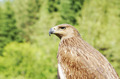 Profile of an eagle against the background of green foliage - PhotoDune Item for Sale