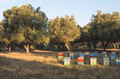Colorful beehives - PhotoDune Item for Sale
