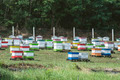 Beehives in bee farm - PhotoDune Item for Sale