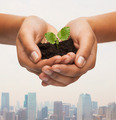 woman hands holding plant in soil - PhotoDune Item for Sale
