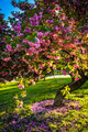 Colorful trees in Druid Hill Park, Baltimore, Maryland. - PhotoDune Item for Sale