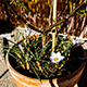 Blooming Flower on a Sunny Day - VideoHive Item for Sale