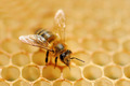 Working bees on honey cells - PhotoDune Item for Sale
