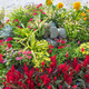 colourful flowerbed - PhotoDune Item for Sale