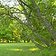 Tree - VideoHive Item for Sale