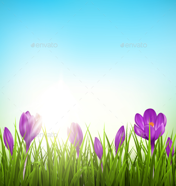 GraphicRiver Green Grass Lawn with Violet Crocuses 10581690